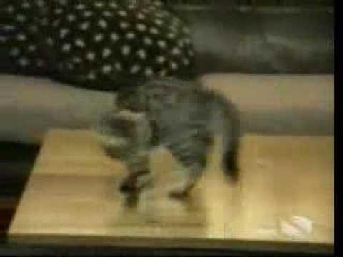 Kattenbloopers 2