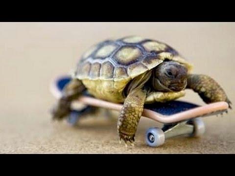 Grappige en schattige schildpadjes 3