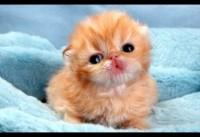 Schattige babydieren 3