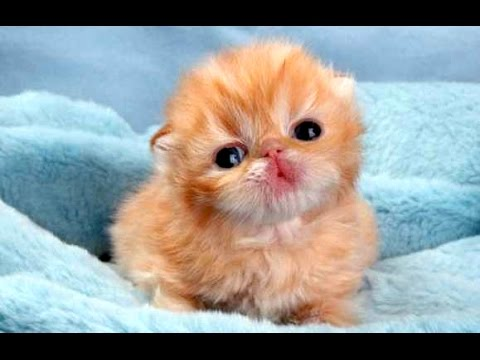 Schattige babydieren 1