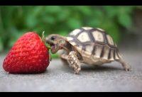 Schildpadden compilatiefilmpje 2