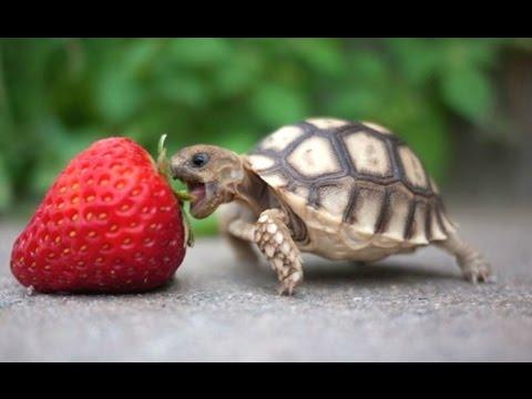 Schildpadden compilatiefilmpje 1
