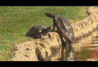 Schildpadden compilatie 1
