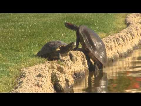 Schildpadden compilatie 2