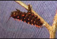 Van eitje tot vlinder 4