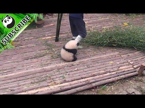 Panda wil knuffelen 2