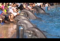 Dolfijnenshow SeaWorld San Diego 3