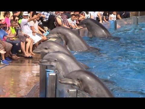 Dolfijnenshow SeaWorld San Diego 1