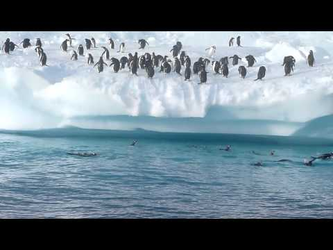 Pinguin Fun in Antarctica