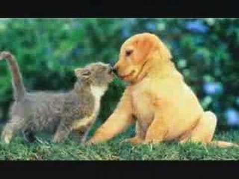 Schattige dieren filmpjes