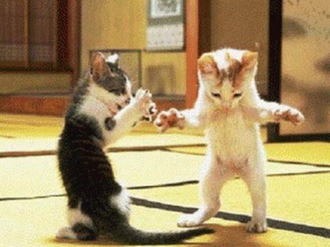 Dansende dierenfilmpjes