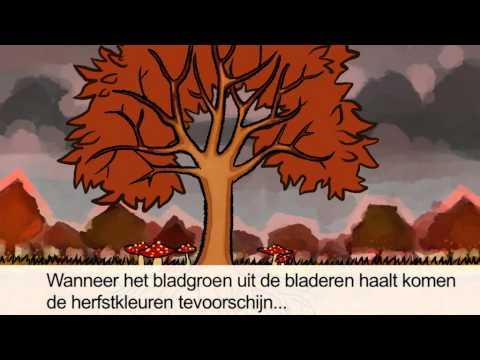 Waarom veranderen bomen in de herfst