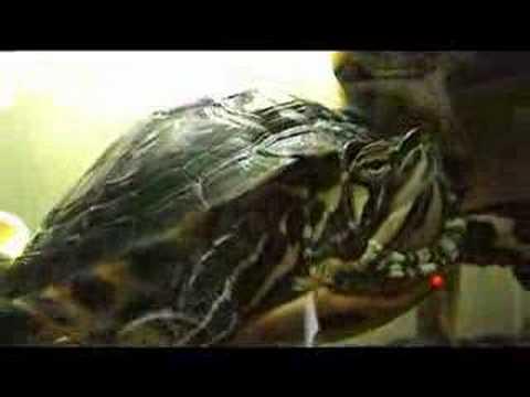 Schildpadjes filmpjes kijken