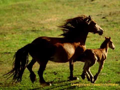 Mooie Paarden 2