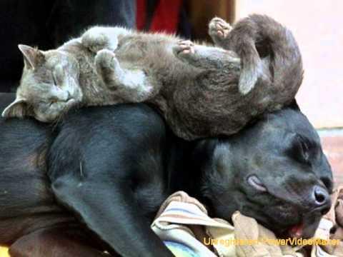 Slapende dieren 1
