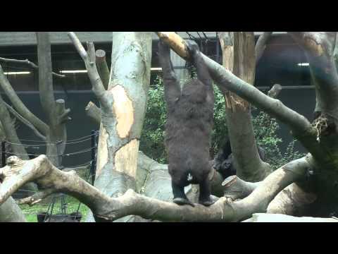 dierentuin artis filmpje