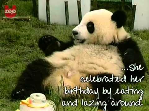 Panda filmpje online kijken