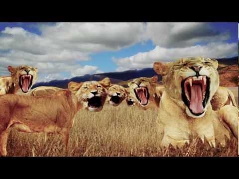 Leeuwenfilmpjes online kijken