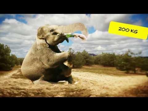 Olifantenfilmpjes online kijken