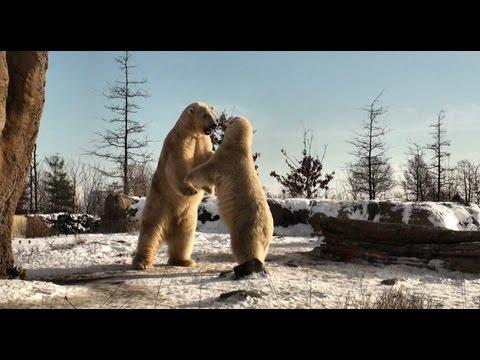 Leukste dierentuin momenten