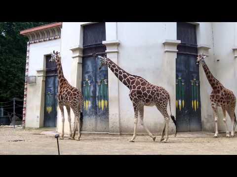 Zoo Antwerpen filmpje