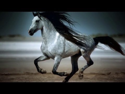 Amazing Galloping Horses 4