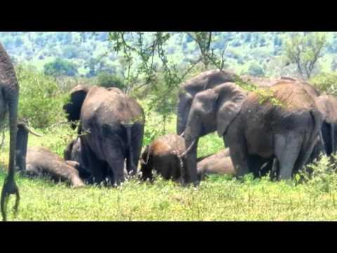 Olifanten in het KrugerPark 3