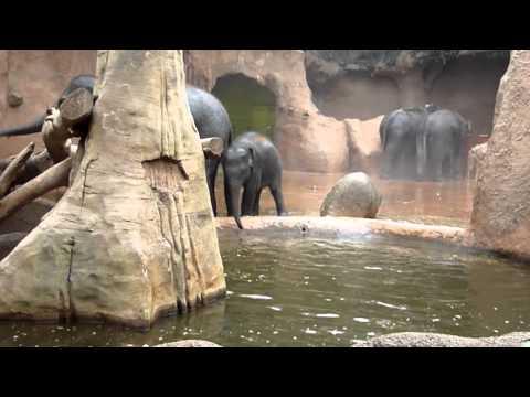 Olifanten spetterpret 2