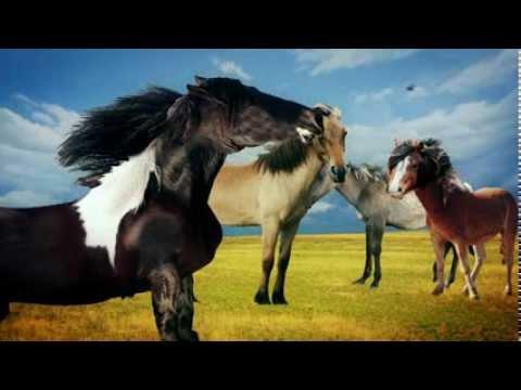 Paarden Kuddeleider 5
