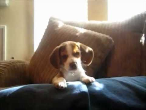Top 10 Funny and Cute Dog Videos 4