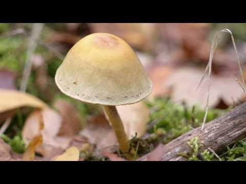 De Vier Jaargetijden - De Herfst 1