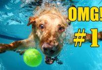 De Beste Grappige Honden Filmpjes 9