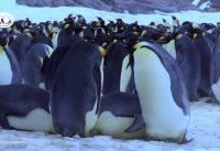 Pinguïns Undercover - de bloopers 9
