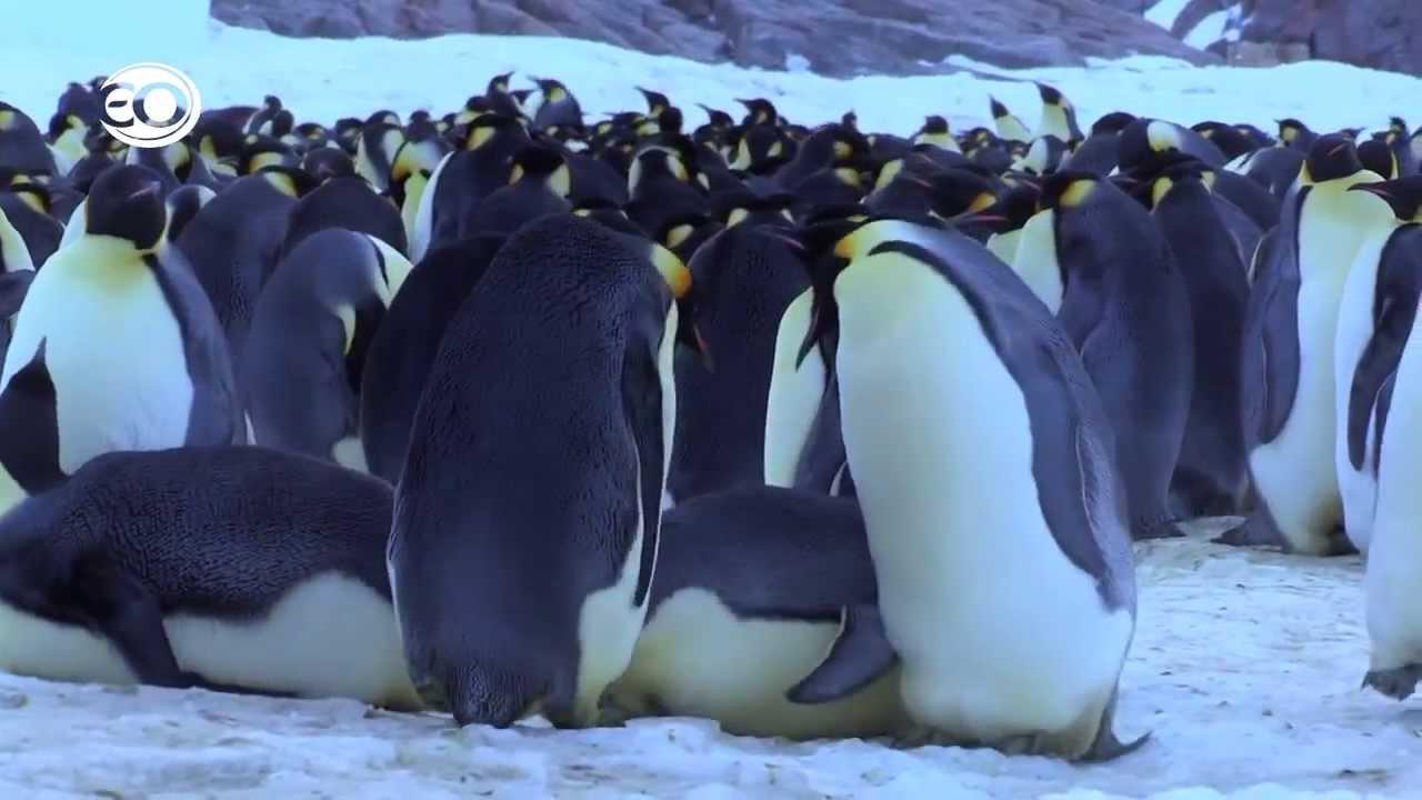 Pinguïns Undercover - de bloopers 2