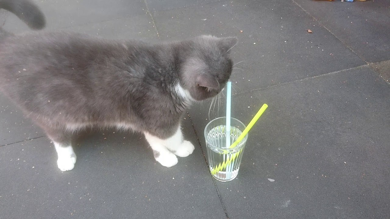 Jack de kitten 1