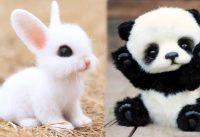 Sooo cute, baby animals 14