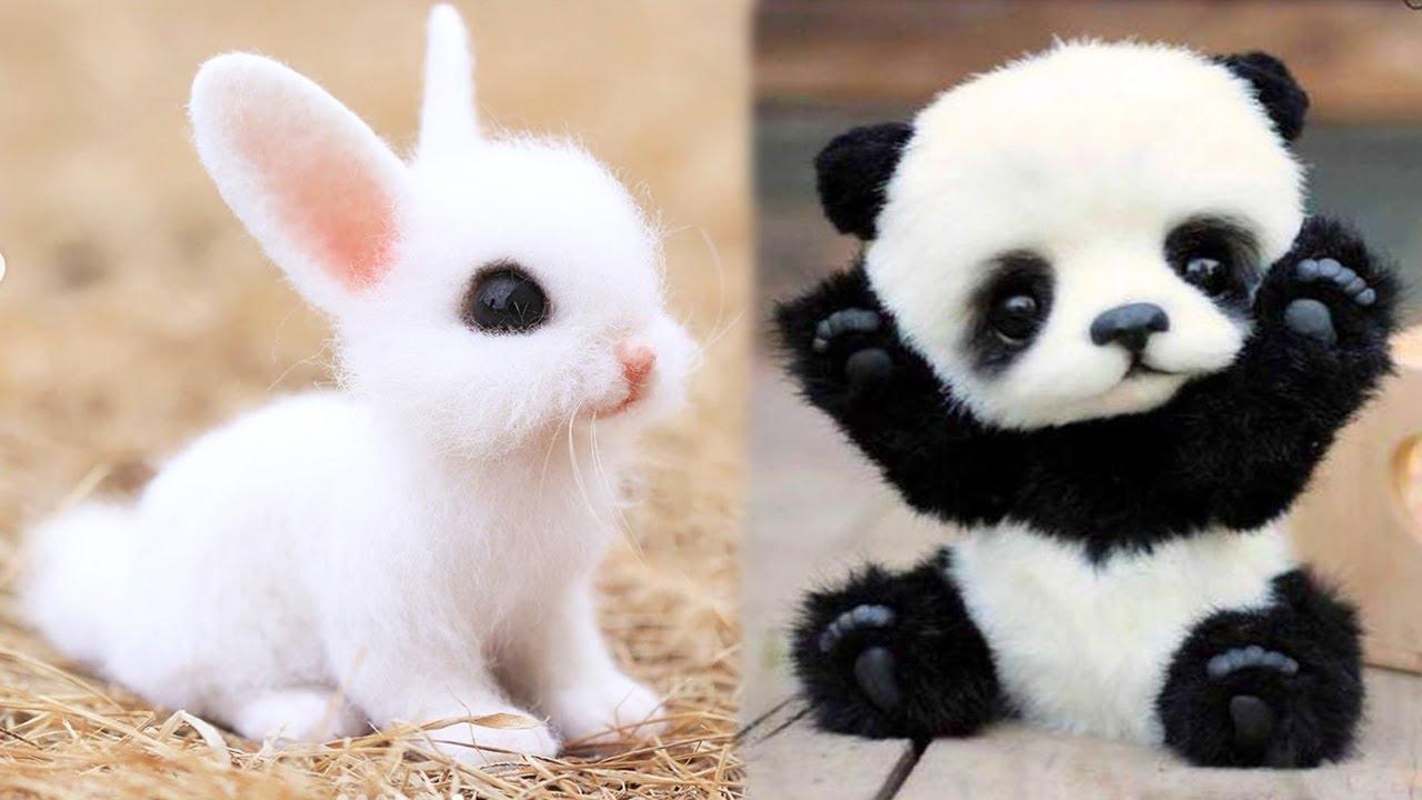 Sooo cute, baby animals 1