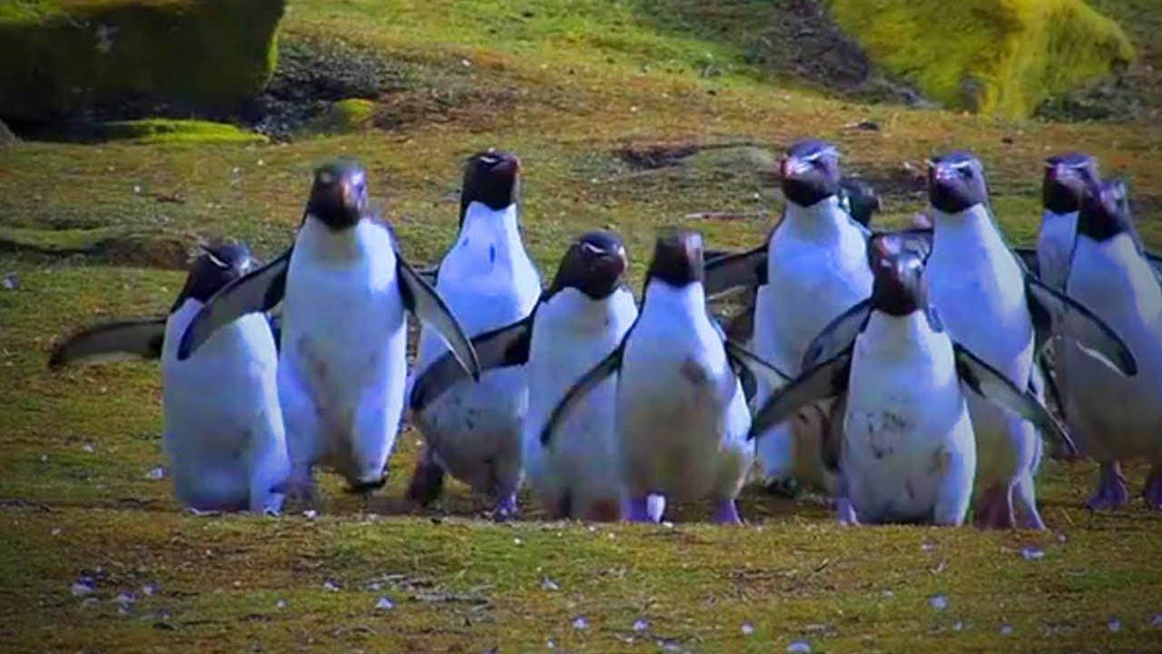 Grappige pinguins 1