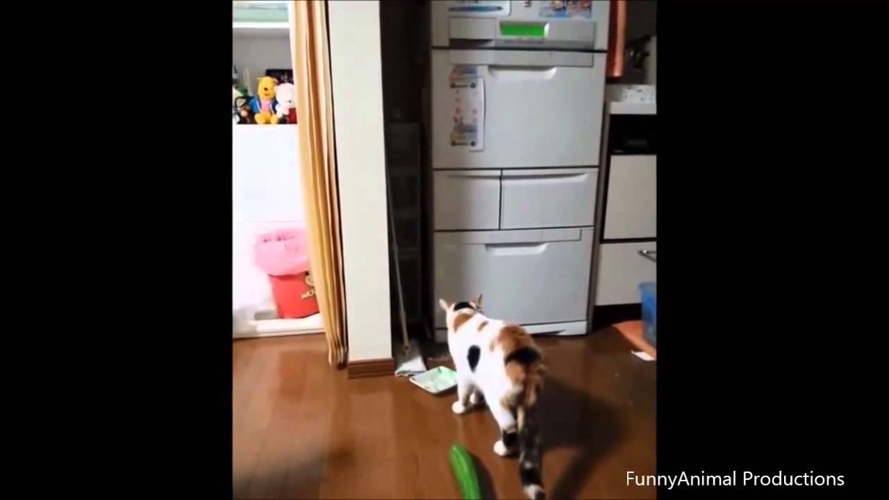 Katten en komkommers 1